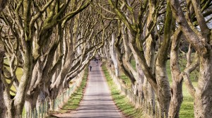149907-Game_of_Thrones_Film_Location_-_Stranocum,_Dark_hedges