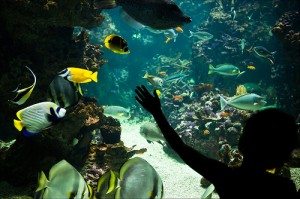 riverwatch-aquarium - derry - irlande - Nord - visite -poisson