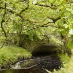 wicklow - pont - rivière - forêt - irlande- parc