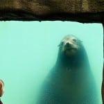phoque-zoo-belfast-irlande-nord