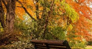 Iveagh Gardens - park - jardin - dublin - promenade - balade - parc - Juno Bengochea - banc - Fontaine - détente - irlande - tourisme