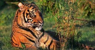 Tigre Fota Wildlife Park